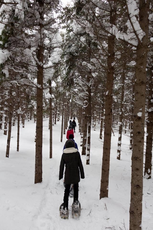 Sentiers raquettes et ski (Auteur : Josée Ouellet)